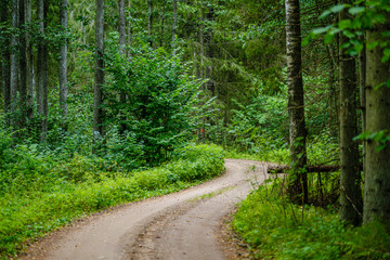 Photo Stands Road in forest wavy gravel road in green summer forest