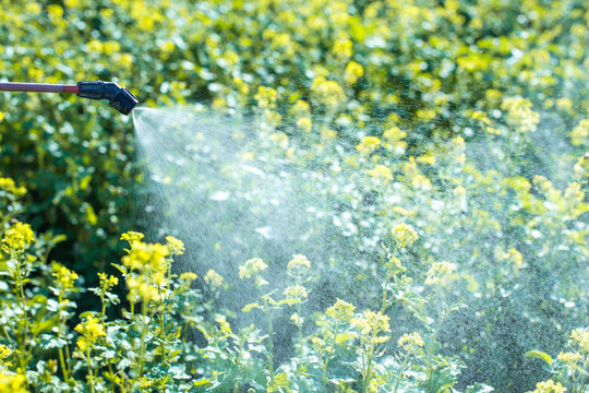 pest control, chemicals in agriculture