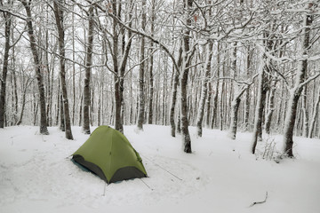 Wall Mural - Green Tent In Forest Snow Covered