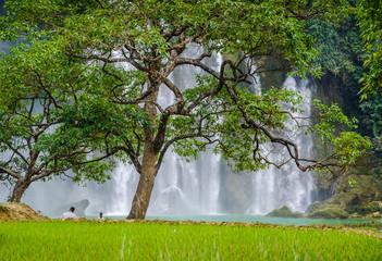 Paysage naturel et relaxant, cascade de Ban Gioc en arrière plan, Vietnam.  Wall mural
