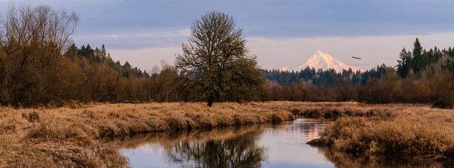 Panoramic Snowpacked Mount Hood in Fall/Winter sunset