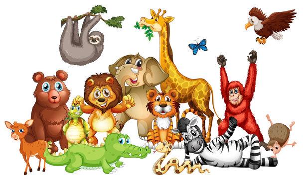 Many cute animals on white background