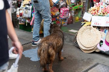 台湾の野良犬