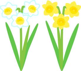 白い花と黄色い花の水仙