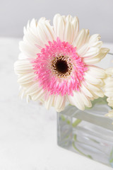Door stickers Gerbera Beautiful gerbera flower on light background