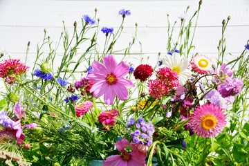 Wall Mural - Wunderschöne Sommer Blumen Wiese - Grußkarte Sommerblumen