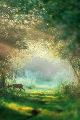 Spoed Foto op Canvas Ree Roe deer doe crossing misty forest trail at dawn.