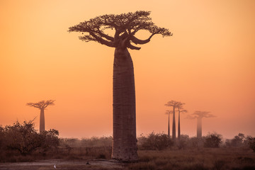 Photo sur cadre textile Baobab African landscape with a big baobab tree
