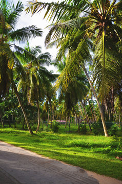 La Digue, Seychelles: Road with Palm Trees and lush green vegetation