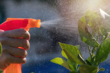 Woman spraying flowers in the garden. Pesticides, insecticide protection.