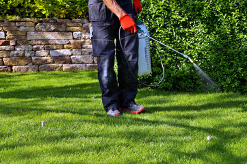 spraying pesticide with portable sprayer to eradicate garden weeds in the lawn. weedicide spray on the weeds in the garden. Pesticide use is hazardous to health. Weed control concept. weed killer  Fototapete
