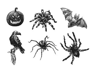 Spider sketch vector set of illustration. Hand drawn style picture.