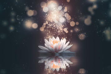 Fotobehang Waterlelies abstract background with lotus flowers