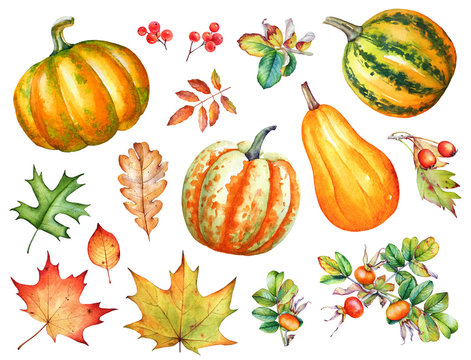 Watercolor autumn leaves, berries and pumpkins on white background.