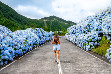 Azores, Young woman in the middle of road with white and blue hydrangea at the roadside at Sete Cidade (Seven Cities), São Miguel, Azores - Portugal