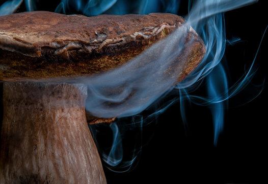 Сlose-up mushroom in smoke. Isolated on black background. Wonderland mushroom. magic mushroom. Fairy mushroom. Negative space. Halloween.