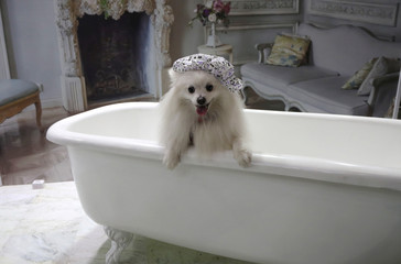 """A dog using a shower cap poses for pictures inside a bath tub during """"Pet Experience"""" in Sao Paulo"""