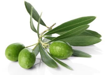 オリーブの枝と果実