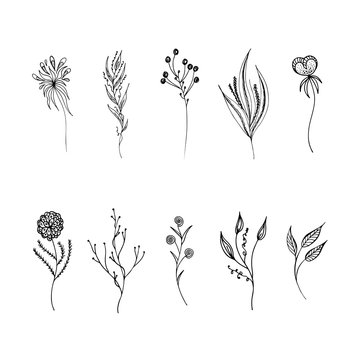 Line art flowers set outline in hand drawn style. Vintage floral collection, great design for any purposes. Black flowers set outline hand on white background. Ink line drawn tropical leaves