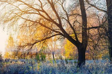 sunny autumn landscape with frost