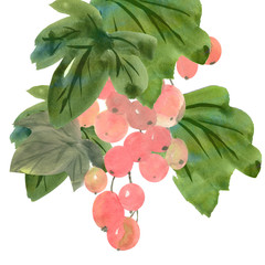colorful illustration of branch of pink grapes