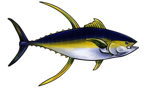 Ahi, or Yellowfin tuna