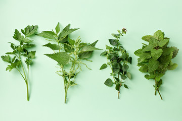 Fresh herbs on pastel background Wall mural