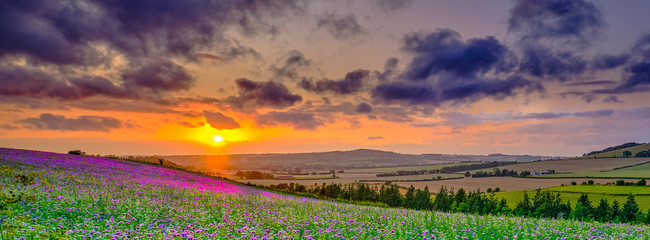 Foto op Plexiglas Cappuccino Summer sunset over the Meon valley towards Beacon Hill with a field of thistles catching the golden light.