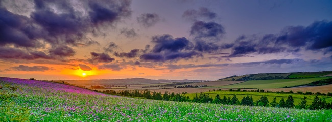 Summer sunset over the Meon valley towards Beacon Hill with a field of thistles catching the golden light.