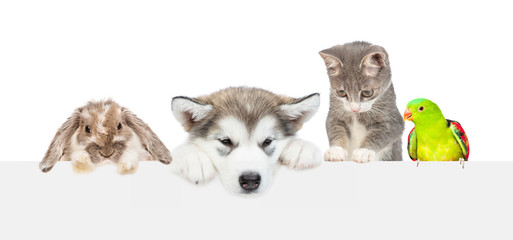 Large group of pets  over empty white banner looking down. isolated on white background. Empty space for text