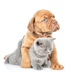 Portrait of a mastiff puppy with gray kitten. isolated on white background