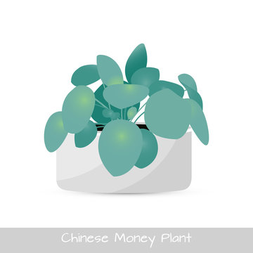 Chinese money plant isolated. Vector Illustration
