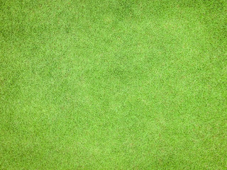 Tuinposter Gras Green grass texture pattern background golf course turf lawn from top view in bright yellow green color