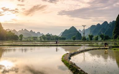 Coucher de soleil sur les rizières et pics karstiques, province de Cao Bang, Vietnam.