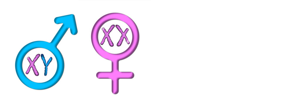 Colored graphics with white background symbolizing male and female with X and Y chromosomes