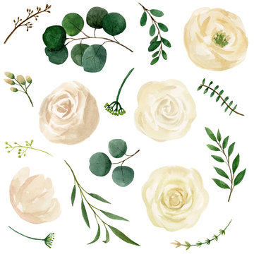 Flower watercolor hand draw collections. Botanic composition for invitation card, wedding. Vintage Flower illustrations.