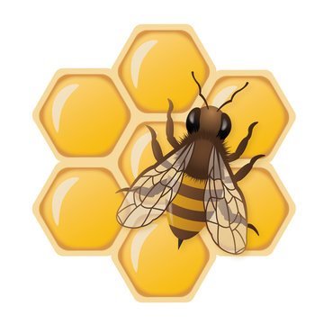 3D honey bee illustration on honeycombs with white background