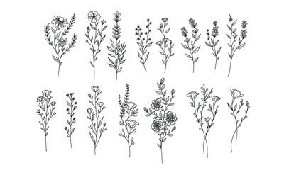 set of flower lineart for wedding and vintage decoration, floral illustration vector