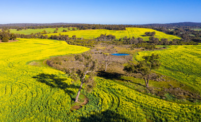 Watering hole between Canola Fields in Toodyay, Western Australia