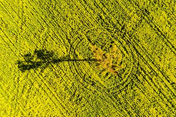 Shadow of Tree in flowering Canola Field in Toodyay, Western Australia