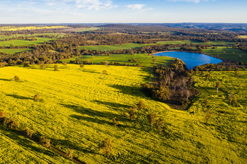 Lake between Canola Fields in Toodyay, Western Australia