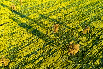 Shadows in flowering Canola Field in Toodyay, Western Australia