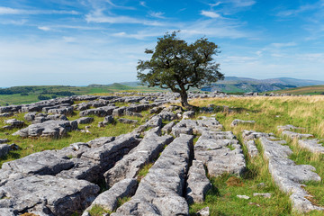 Wall Mural - Limestone pavements at the Winskill Stones near Settle