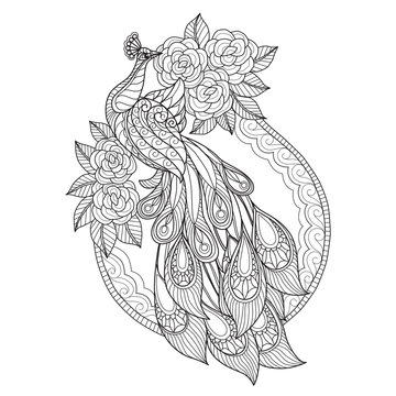 Hand drawn sketch illustration of peacock and flowers for adult coloring book.