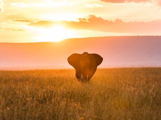 A single elephant in the Masai Mara while sunset