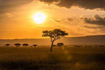 Foto op Canvas Afrika Acacia trees in front of the sunset in the Masai Mara