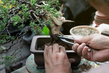 Printed kitchen splashbacks Bonsai Making of bonsai trees, Wiring a tree into the pot. Handmade accessories Wire cutters and scissors bonsai tools, stand of bonsai, Concept Bonsai.