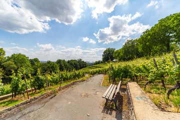 winegrowing in the city of Frankfurt/Main