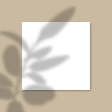 Square Paper Mockup with realistic shadows overlays leaves on beige background. Vector Shadow Of A Tropical Plant.
