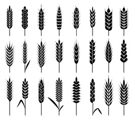 Wheat ears icons. Organic agriculture cereals harvest. Stalk grain rice and wheat, corn and oats, barley natural product vector logos